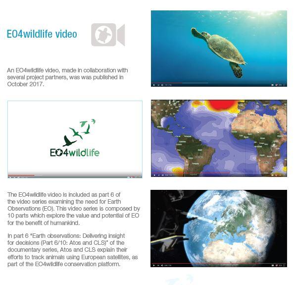 EO4wildlife-Newsletter-Issue-4-January-2018