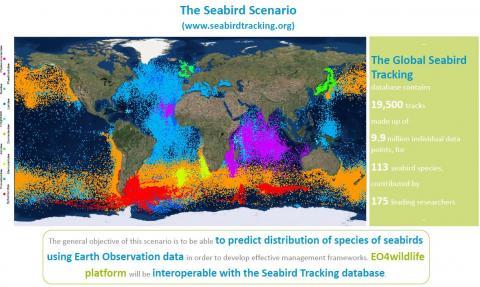 SEABIRDS IN SPACE!  (www.seabirdtracking.org)